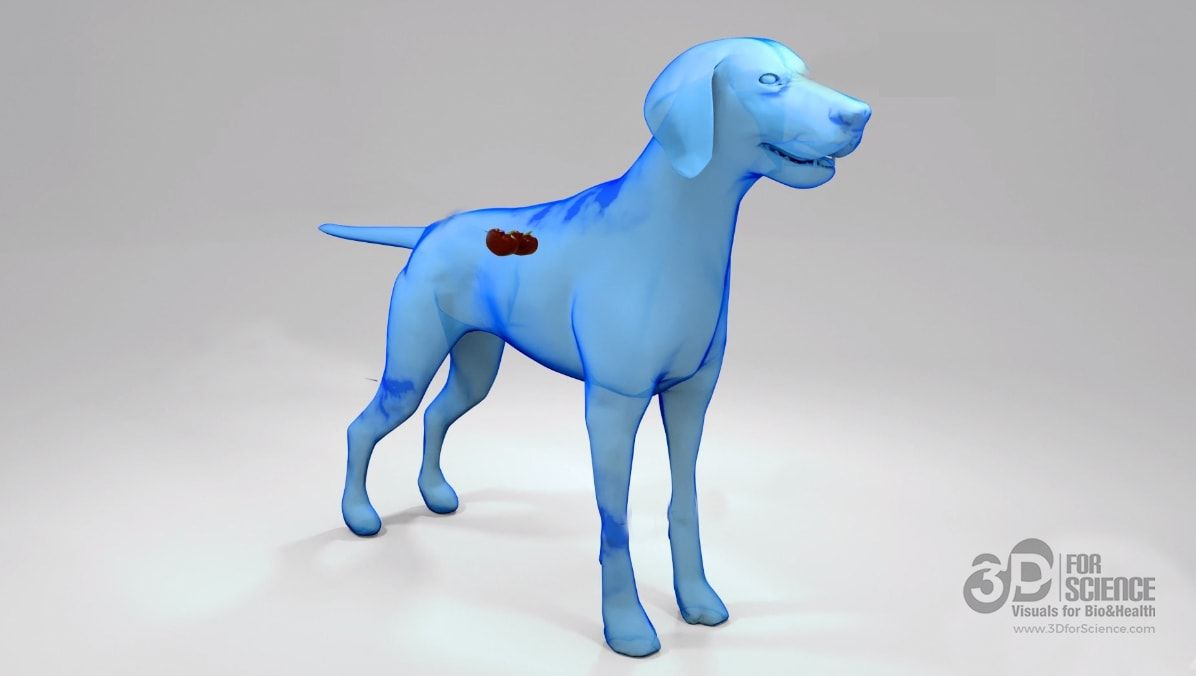 letifend vaccine canine