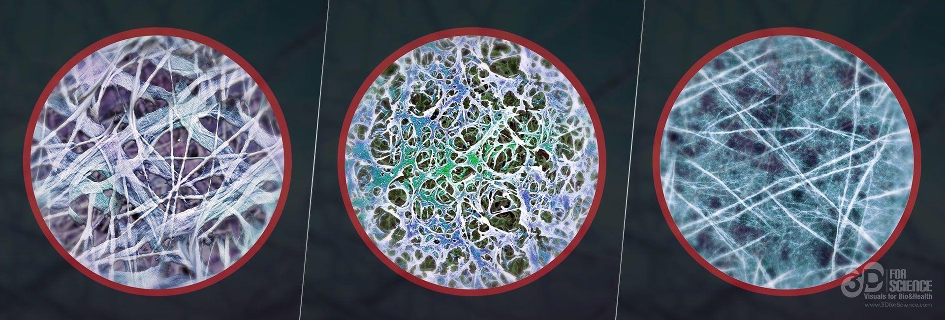 Bioiberica b2cool