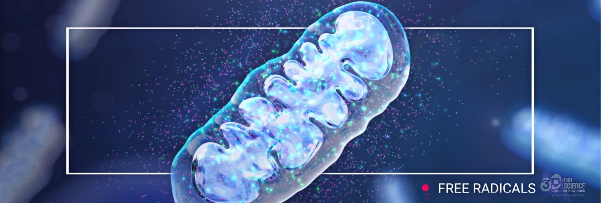 infinitec mitochondria treatment