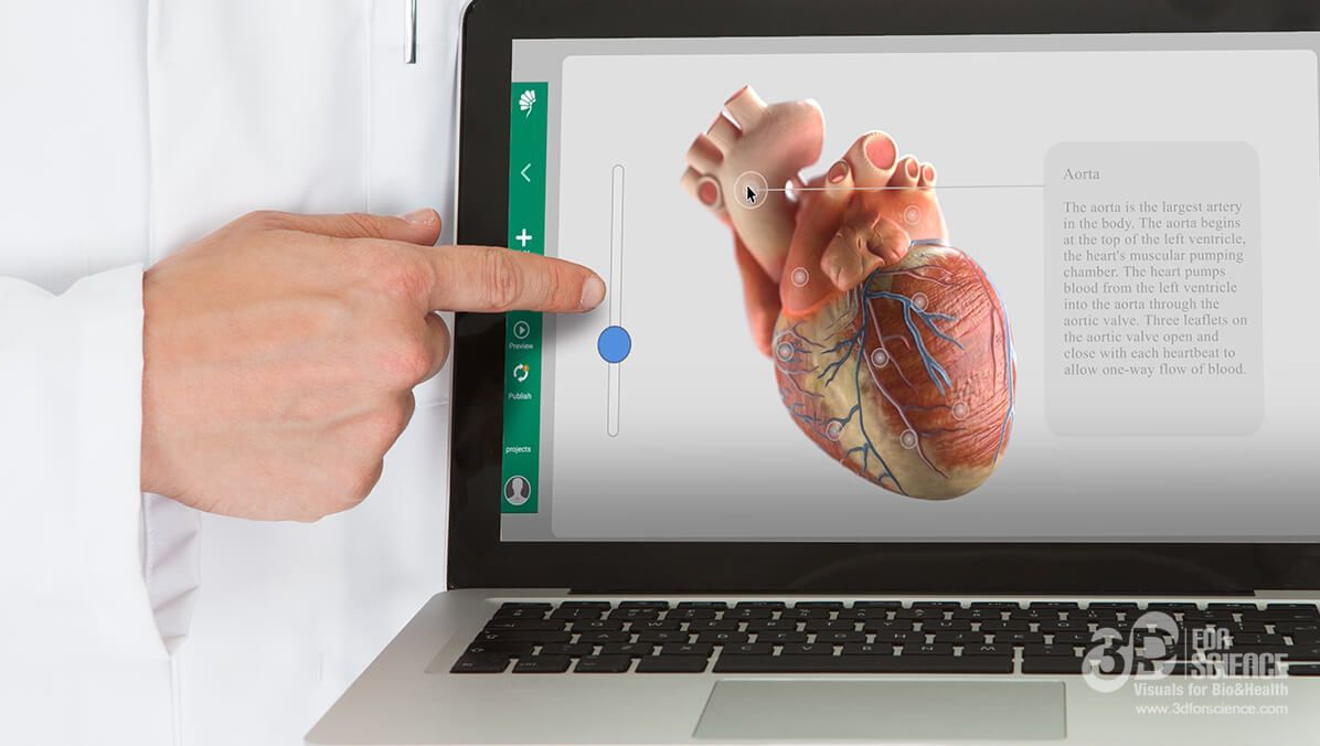 doctor using interactive medicine to show the functions of a heart