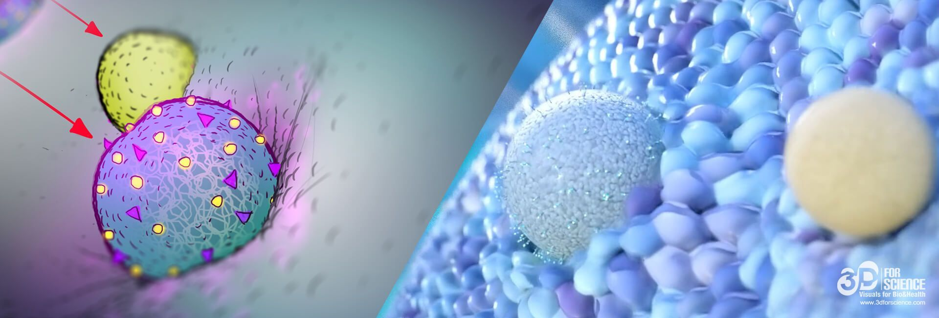 scientific animation used in healthcare industry
