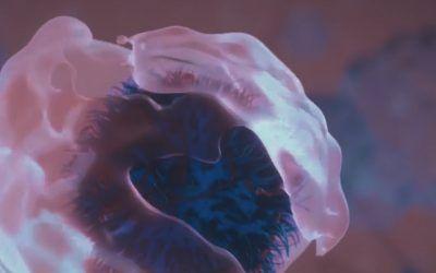 Immunology virtual partnering 2021
