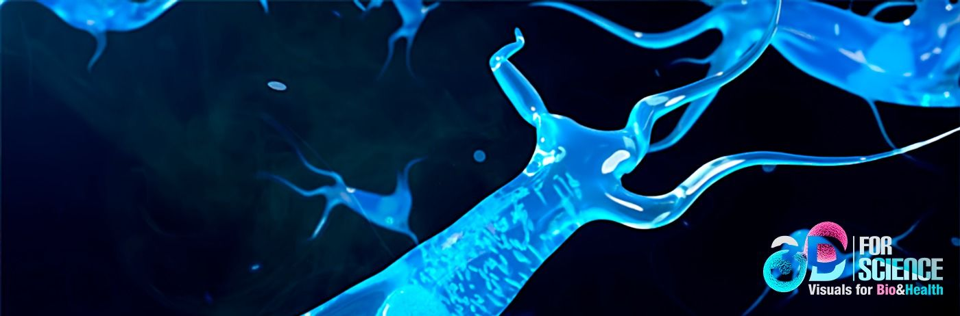 Mitochondria and free radicals case aging processes